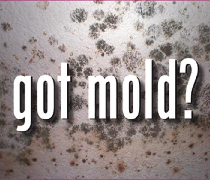 Mold Remediation Does Your Home Have Mold?